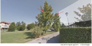 alberi 1