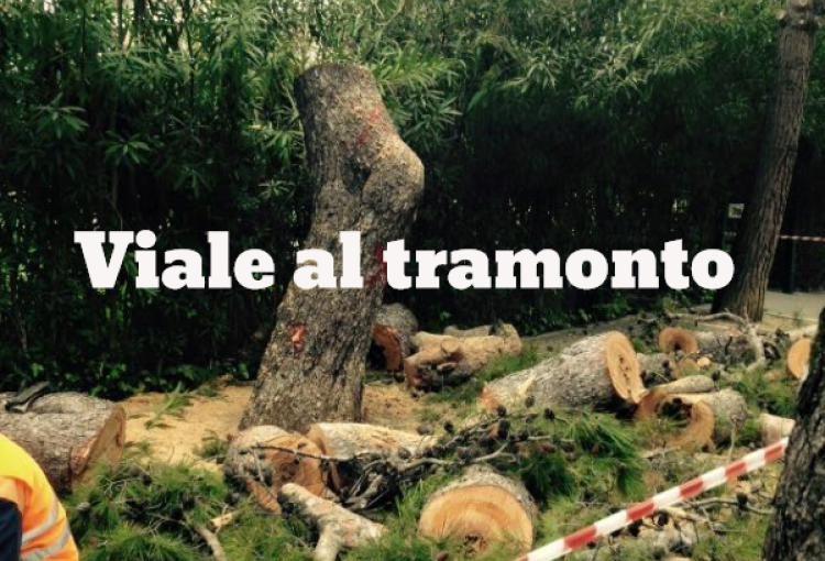 Abbattimento degli ultimi 19 pinus pinea a Battaglia Terme