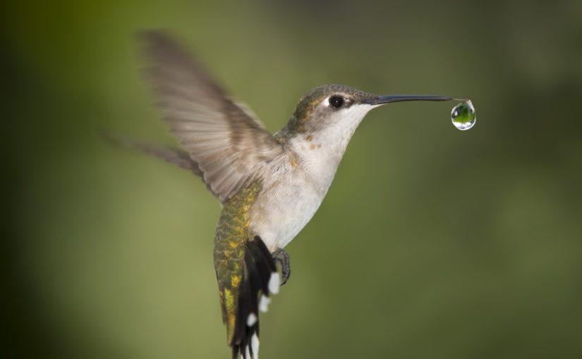 La goccia del Colibrì in difesa della salute e dell'ambiente